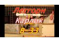 Цыплята несушки В-33