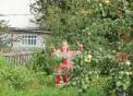 Куплю сад